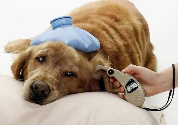 Диабетический корм для собак