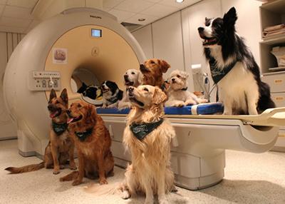 Магнитно-резонансная томография для ваших домашних питомцев