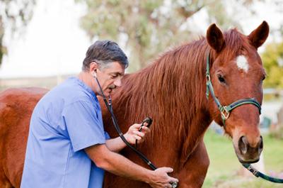 Лечение чесотки у лошадей, крупного рогатого скота и верблюдов