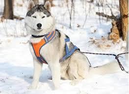 Виды амуниции для собак